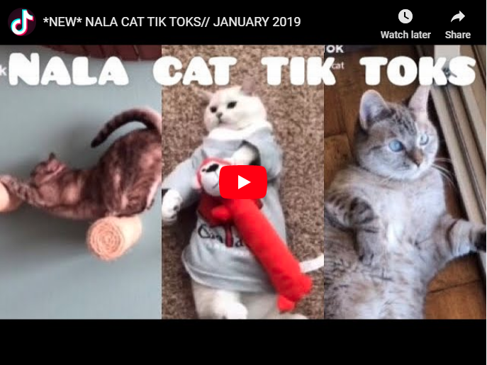 How to get famous on TikTok